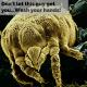 Up close image of a germ