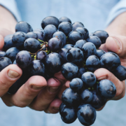 A person holding out a handful of purple grapes.